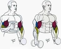 Лучшие упражнения на бицепс и техника их выполнения