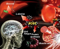 Состав аминокислот BCAA Xplode Powder и правила употребления