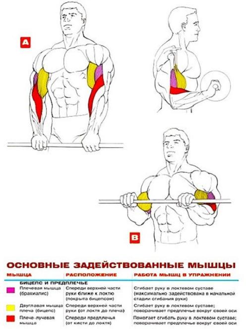 Упражнения для накачивания рук в домашних условиях