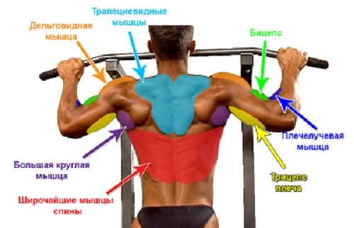 Подтягивания позволяют эффективно тренировать спину и бицепс.