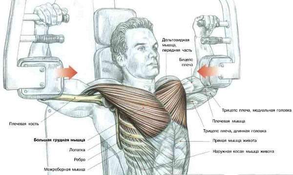 Работа над грудными мышцами.