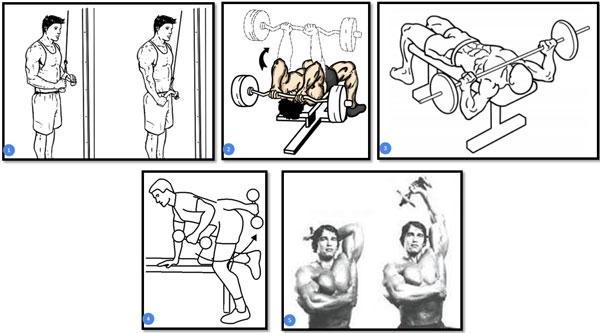 Упражнения для роста бицепса нужно выполнять постепенно, меняя нагрузку и вид тренировки каждую неделю.
