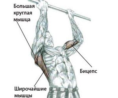 Во время прокачки рук на турнике задействованы широчайшие мышцы спины и бицепс.