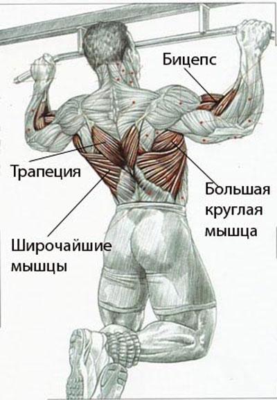 Занимаясь 2-3 раза в неделю, можно добиться видимых результатов уже спустя месяц. Для оттачивания сформировавшихся мышц бицепса рекомендуется совершать подъемы и тяги гантелей.