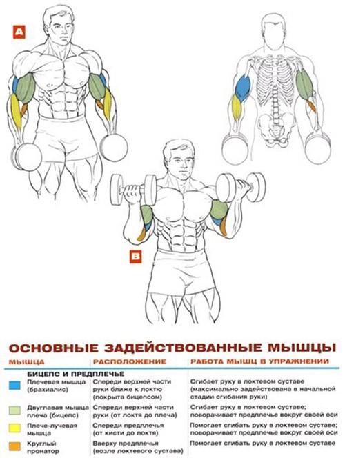 Правильное выполнение упражнений.