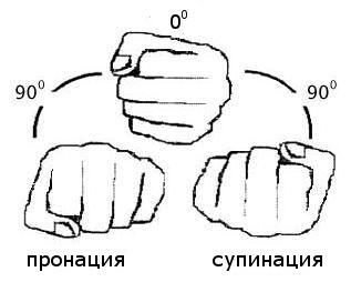Виды хватов для выполнения упражнения.