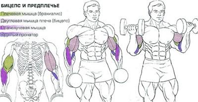 Правильное выполнение упражнений на бицепс с супинацией.