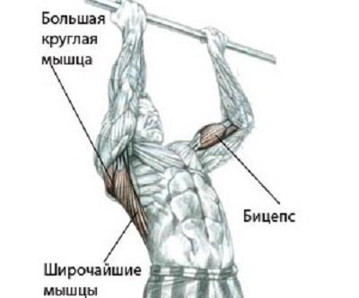 Упражнения на турнике являются очень эффективными не только для бицепса, но и для мышц спины