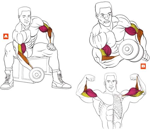 Правильное выполнение упражнений для накачки мышц с помощью гантелей.