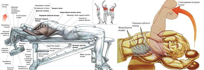 Тренировка для грудных мышц для мужчин в домашних условиях