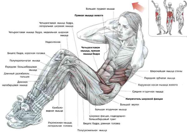 Упражнения для мышц живота изоражения