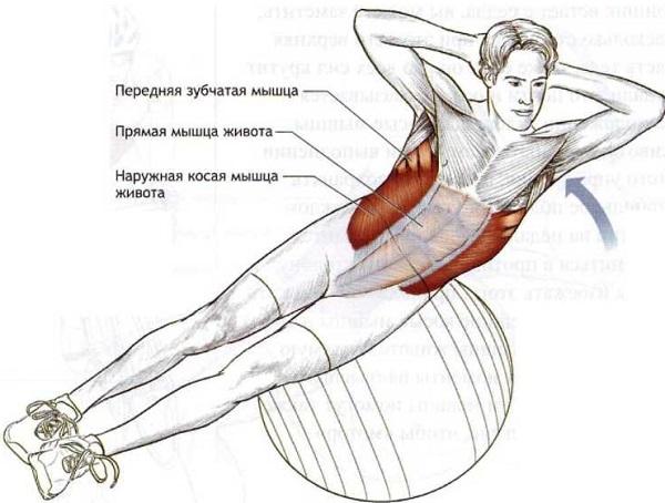 Как накачать косую мышцу живота в домашних условиях