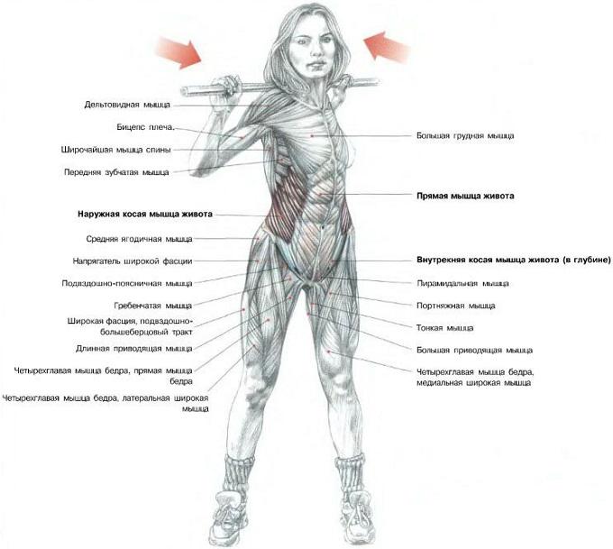 Как накачать все мышцы живота в домашних условиях 986