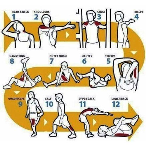 Разминка перед тренировкой обязательна. Данный комплекс поможет разогреть все мышцы тела: 1 – шеи, 2 – плечевого пояса, 3 – груди, 4.бицепсы, 5 – трицепсы, 6. ягодиц, 7 - внешней стороны бедра, 8 – внутренней стороны бедра, 9 – голени, 10 - икроножные, 11 - верхние спинные, 12 – нижние спинные