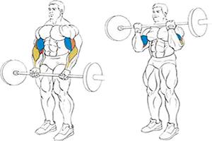 Правильное выполнение классического упражнения на подъем штанги стоя.